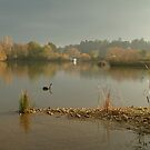 Autumn Fog, Lake Daylesford by Joe  Mortelliti
