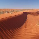 Madigan Line Sand Hill Simpson Desert  by Joe Mortelliti