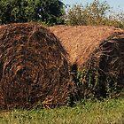 Rolling in the Hay by John  Kapusta