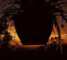 spider sunset by webgrrl
