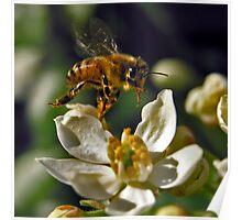 Pollen Aware 04 Poster