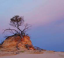 Mungo rock and tree by Peter Hammer