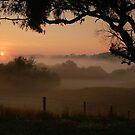 Otway Ranges by Joe Mortelliti