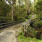 Bridge Track, Otway Ranges by Joe Mortelliti