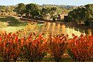 Uraidla South Australia by Helen  Page