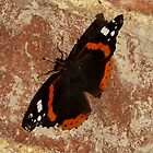 RED ADMIRAL by Marilyn Grimble