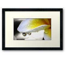 A closer look Framed Print