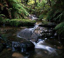 Leura Cascades by Dot Radley