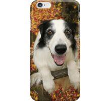 Cute Collie in Autumn iPhone Case/Skin