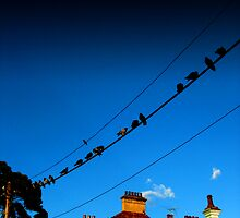 Birds on a wire by Route64