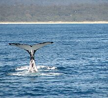 Whale Tail by David  Kembrey