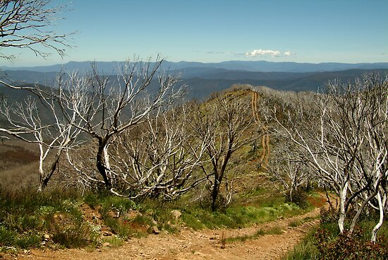 View from Mt Blue Rag,High Country by Joe Mortelliti