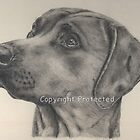 Rhodesian Ridgeback Graphite Portrait by Michelle Wrighton