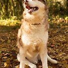 Husky 3 by Rebecca Cozart