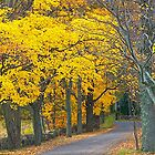 Canopy of Color by John Butler