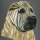 &#x27;Kruger&#x27; - Shar-Pei by Michelle Wrighton