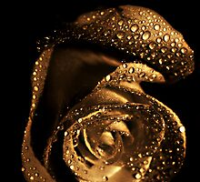 Antique Rose by Lee Burgess