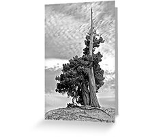 Solitary Sentinel in B&W Greeting Card