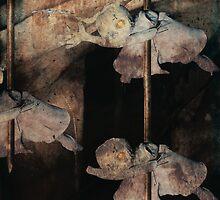 Fairy Carnage by Amanda J Slack-Smith