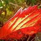 Leaf by Shulie1