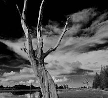 Dead Tree by Mark Snelson