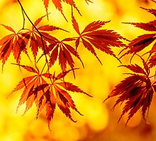 Japanese maple set by LudaNayvelt