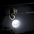 Possum &amp; The Moon by Alexander Kesselaar