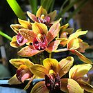 Miniature Cymbidium Orchid ( 3 ) by Larry Lingard-Davis