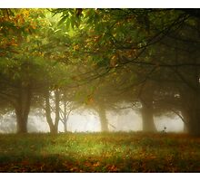 Forest by Aaron .