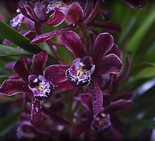 Miniature Cymbidium Orchid ( 6 ) by Larry Lingard-Davis