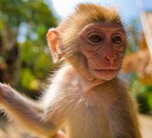 Monkey Munchies by Craig Scarr