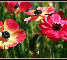 Flowers from Wisteria House Parramatta by RailDen