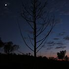 Tree - Sunrise @ Olgas by bongo444