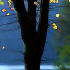 The last Leaves by Angelika  Vogel