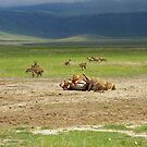 Lions Dinner by flicker15