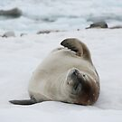Seal Bliss by Clare McClelland