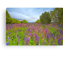 Lupin River Canvas Print