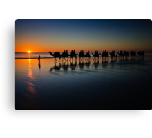 Cable Beach Camels Canvas Print