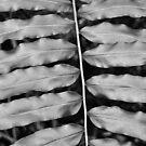 Symmetry in Black and White  by John  Kapusta