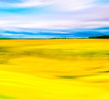 Golden Farm Fields Of England In Spring by Mark Tisdale