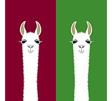 LLAMA PORTRAITS - RED & GREEN Photographic Print