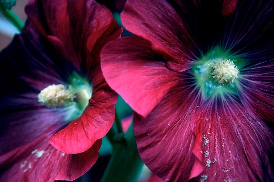 flowers by AnaBanana
