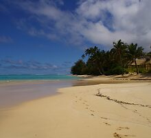Palm Grove beach by Ozmoe