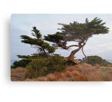 Coastal Forces,Ocean Grove Metal Print