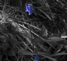 a lonely blue bell by Craxford