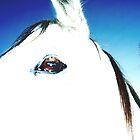 Peppi's eye by Sharna Wood