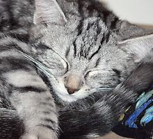 Kitten Close up, sleeping by Sandra Chung
