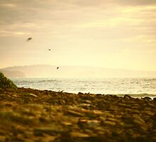Long Reef Mornings by Dallas Maurer