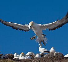 Flaps down by David Burren