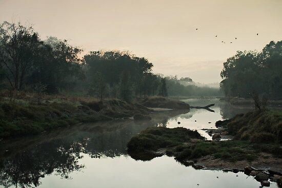 The Fog of Dawn by Scott G Trenorden